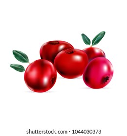 berries red cranberries, cranberry, vector illustration