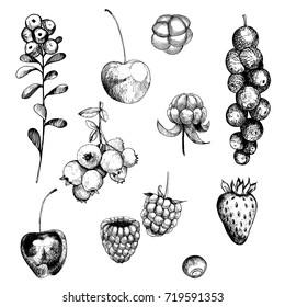 Berries set. Currant, strawberry, blueberry, cloudberry, blackberries, cherries. Vector hand-drawn illustration.