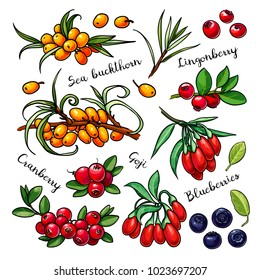 Berries vector set: sea buckthorn, lingonberry, cranberry, goji, blueberry. Hand drawn collection for design, isolated on white
