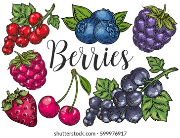 Berry color Hand drawn vector set. Fruit botany illustration. Berries engraving doodle sketch etch line. Currant, raspberry, strawberry, blueberry, cherry on white background. Dessert ingredient