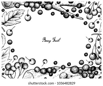Berry Fruit, Illustration Frame Hand Drawn Sketch of Fresh American Cranberries and Jabuticaba or Brazilian Grape Tree Fruits Isolated on White Background.