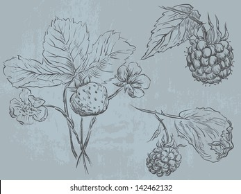 Berry fruit - raspberry and strawberry