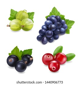 Berry fruit realistic set with isolated. Cranberry, grape, gooseberry and black currant collection.