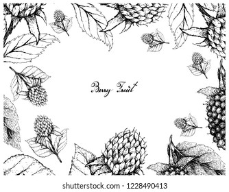 Berry Fruits, Illustration Frame of Hand Drawn Sketch Fresh Kotataberries and Korean Black Raspberries or Rubus Coreanus Fruits With Green Leaves Isolated on White Background.