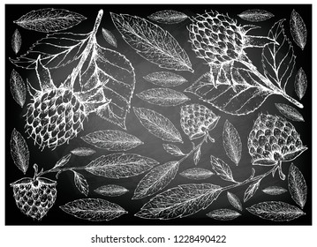 Berry Fruits, Illustration Wallpaper of Hand Drawn Sketch  Fresh Korean Black Raspberries or Rubus Coreanus and Golden Raspberries or Rubus Ellipticus Fruits on Black Chalkboard.