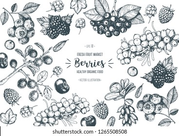 Berry hand drawn, vector illustration frame. Hand drawn sketch illustration with buckthorn, blueberry, blackberry, cherry, barberry, blackthorn, raspberry. Healthy food design template with berry