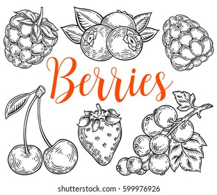 Berry Hand drawn vector set. Fruit botany illustration. Berries engraving doodle sketch etch line. Currant, raspberry, strawberry, blueberry, cherry on white background. Dessert ingredient
