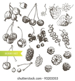 Berry set: highly detailed hand drawn berries.