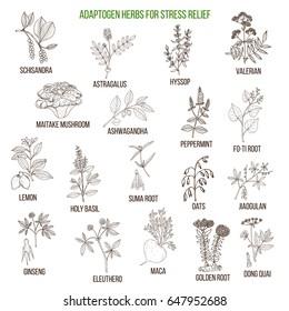 Best adaptogen herbs for stress relief. Hand drawn vector set of medicinal plants