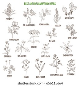 Best anti-inflammatory herbs. Hand drawn vector set of medicinal plants