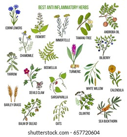 Best anti-inflammatory herbs. Hand drawn vector set of medicinal plants