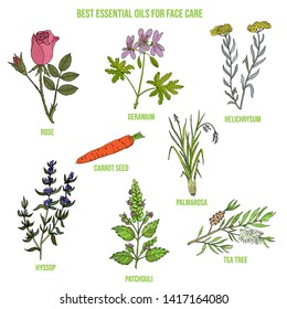 Best essential oils for face care. Hand drawn vector set of medicinal plants
