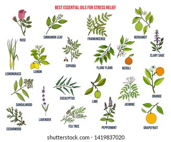 Best essential oils for stress relief. Hand drawn vector set of medicinal plants
