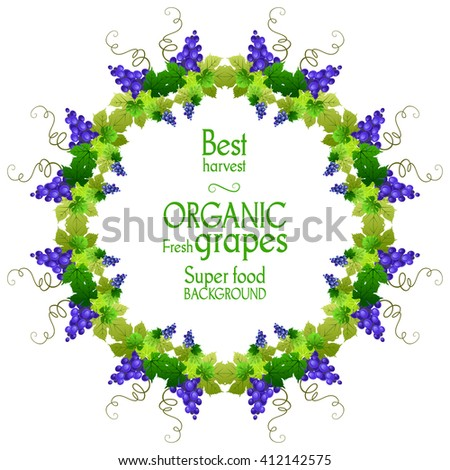 Best Grape Round Frame Natural Design Stock Vector (Royalty Free ...