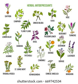 Best herbal antidepressants. Hand drawn vector set of medicinal plants