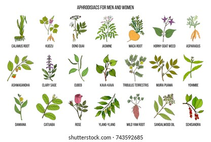 Best herbal aphrodisiacs. Hand drawn vector set of medicinal plants