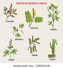 Best herbal remedies for anorexia. Hand drawn botanical vector illustration