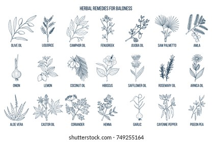 Best herbal remedies for baldness. Hand drawn vector set of medicinal plants