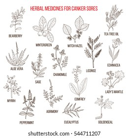 Best herbal remedies for canker sores. Hand drawn set of medicinal herbs