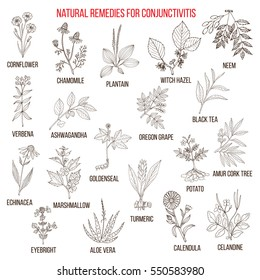 Best herbal remedies for conjunctivitis. Hand drawn set of medicinal herbs