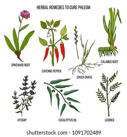 Best herbal remedies to cure phlegm. Hand drawn set of medicinal herbs