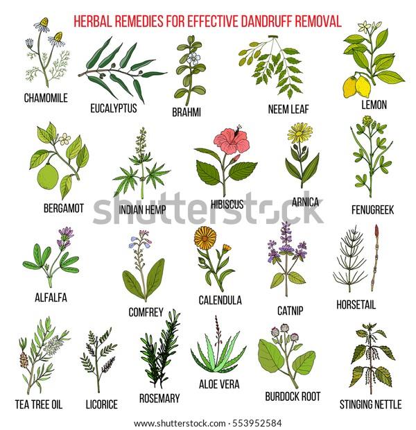 remedios de plantas medicinales para la caspa
