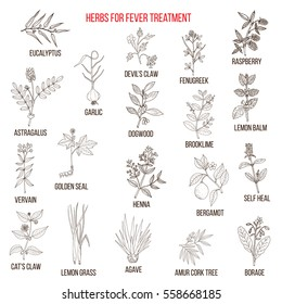Best herbal remedies for fever. Hand drawn set of medicinal herbs