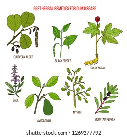 Best herbal remedies for gum disease. Hand drawn vector set of medicinal plants