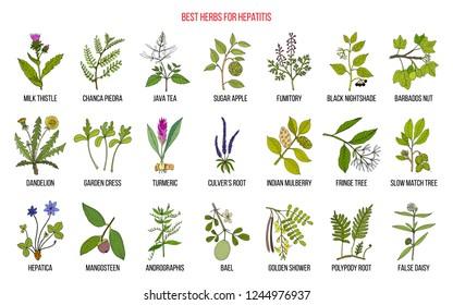 Best herbal remedies for hepatitis. Hand drawn set of medicinal herbs