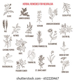 Best herbal remedies for neuralgia. Hand drawn vector set of medicinal plants