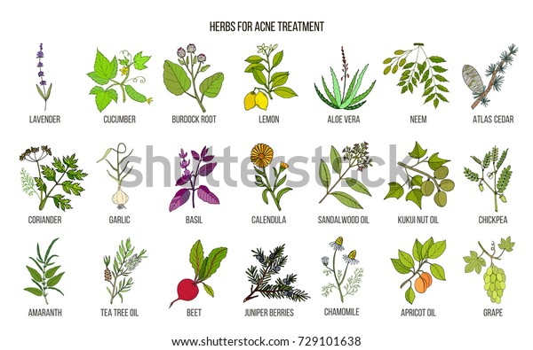 Las Mejores Hierbas Para El Tratamiento Del Acné Conjunto De Vectores De Plantas Medicinales Dibujados A
