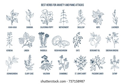 Best herbs for anxiety and panic attacks. Hand drawn vector set of medicinal plants