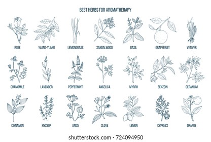 Best herbs for aromatherapy. Hand drawn vector set of medicinal plants