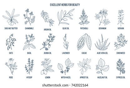 Best herbs for beauty care. Hand drawn vector set of medicinal plants
