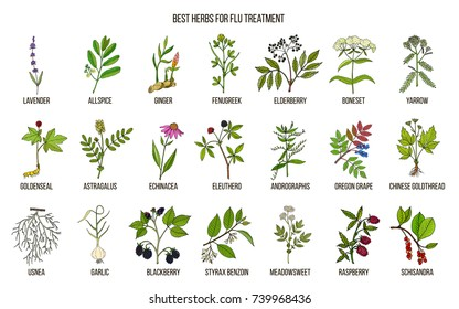 Best herbs for flu treatment. Hand drawn vector set of medicinal plants