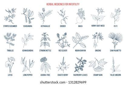 Best herbs for infertility. Hand drawn botanical vector illustration