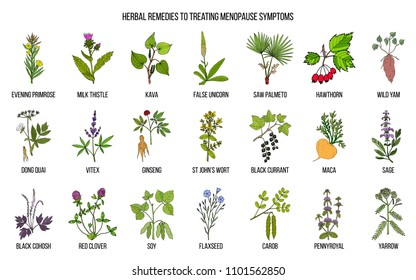 Best herbs for menopause symptom treatment. Hand drawn set of medicinal herbs