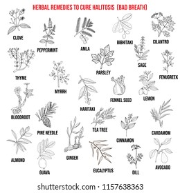 Best medicinal herbs to cure halitosis. Vector hand-drawn collection