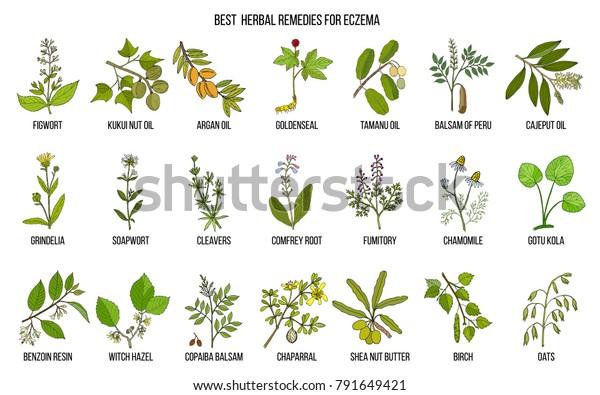 Best Medicinal Herbs Eczema Hand Drawn Stock Vector (Royalty