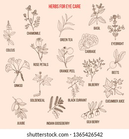 Best medicinal herbs for eyes care. Hand drawn vector set of medicinal plants