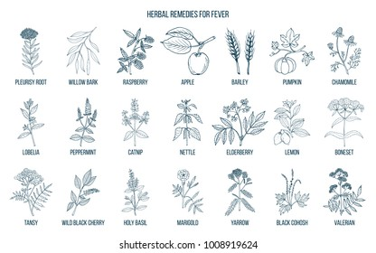 Best medicinal herbs for fever. Hand drawn vector set of medicinal plants