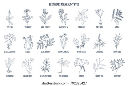 Best medicinal herbs for healthy eyes. Hand drawn vector set of medicinal plants