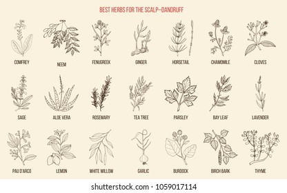 Best medicinal herbs for scalp-dandruff. Vector hand-drawn collection