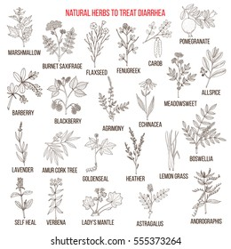Best medicinal herbs to treat diarrhea. Hand drawn vector set of medicinal plants