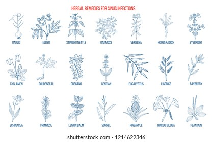 Best medicinal herbs to treat sinus infection. Hand drawn vector set of medicinal plants