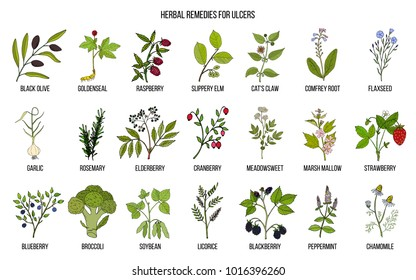 Best medicinal herbs for ulcers. Hand drawn vector set of medicinal plants