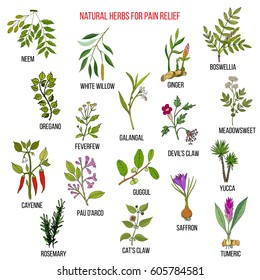 Best natural herbs for pain relief. Hand drawn vector set of medicinal plants