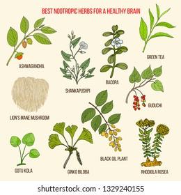 Best nootropic medicinal herbs for a healthy brain. Hand drawn vector set of medicinal plants