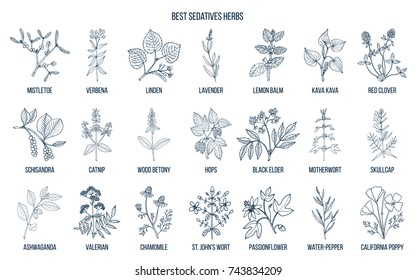 Best sedatives herbs. Hand drawn vector set of medicinal plants