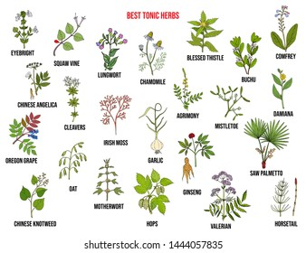 Best tonic herbs collection. Hand drawn vector set of medicinal plants